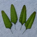 Листики 10 шт. 70мм Green Fern Mulberry Paper Leaves